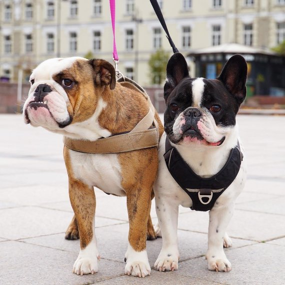 Asmeninio albumo nuotr./Gabijos Kavaliauskaitės fotografuoti šunys