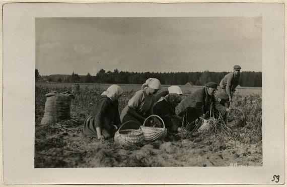 """Balio Buračo nuotr./ Šiaulių """"Aušros"""" muziejaus nuotr./1918 m. ispaniškasis gripas lietuvius užklupo per patį bulviakasį. Daugelis ligonių """"atkrisdavo"""", kai neiškentę lipdavo iš lovų nusikasti bulvių."""