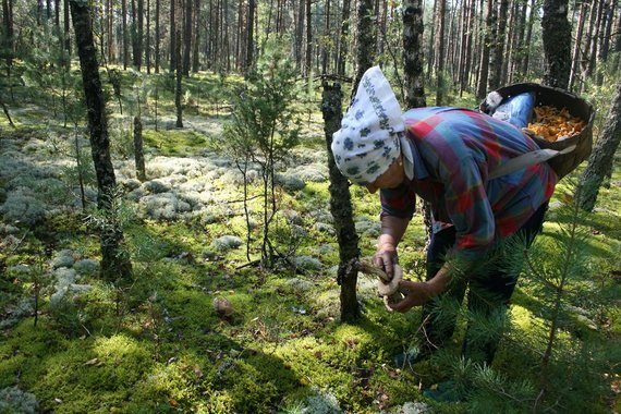 Nematerialaus kultūros paveldo vertybių sąvado nuotr./Šilinių dzūkų grybavimo tradicija