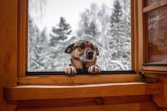 Vidmanto Balkūno / 15min nuotr./Plačiai atverti langus reikėtų kelis kartus per dieną