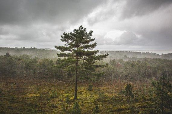 Kuršių nerijos NP nuotr./Kuršių nerijos nacionalinis parkas