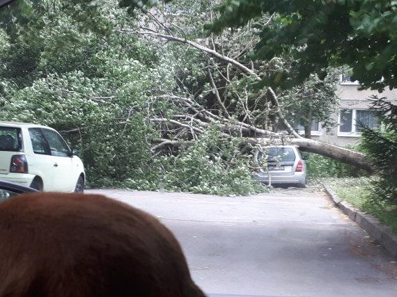 15min skaitytojo nuotr./Smarki audra Vilniuje vartė medžius
