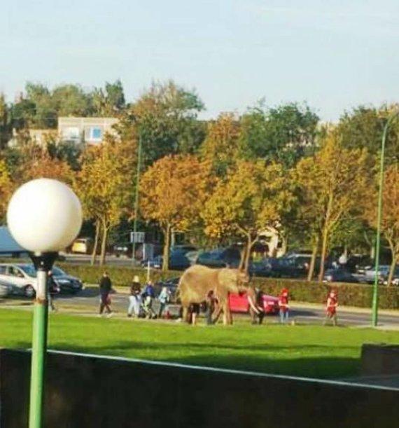 """""""Facebook"""" nuotr./Po Klaipėdą vedžiotas dramblys sukėlė ir nuostabą, ir pasipiktinimą."""