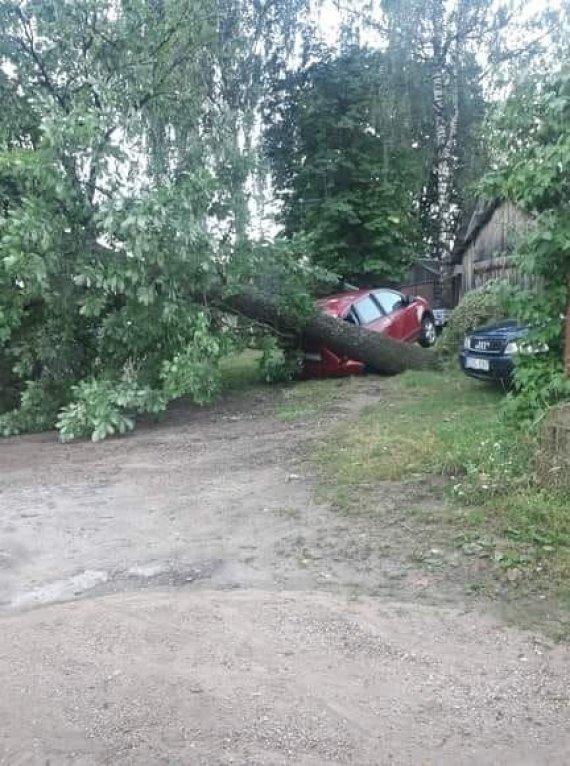 15min skaitytojo nuotr./Švenčionėliuose medis prispaudė automobilį