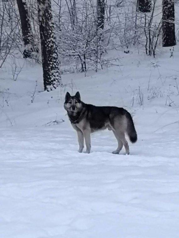 """""""Facebook"""" grupės """"Viršuliškės"""" nuotr./Viršuliškėse pastebėtas vienas po rajoną lakstantis šuo"""