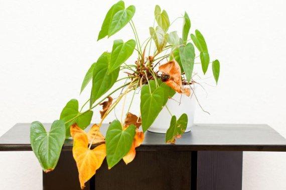 Fotolia nuotr./Kokias klaidas darote prižiūrėdami augalus?