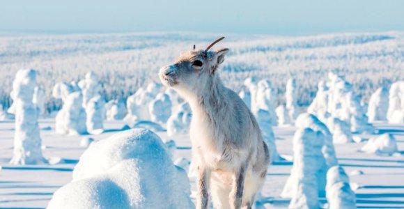 """Filmo """"Elniuko Ailo kelionė per Laplandiją"""" įdomiausius siužeto vingius sukūrė pati gamta"""