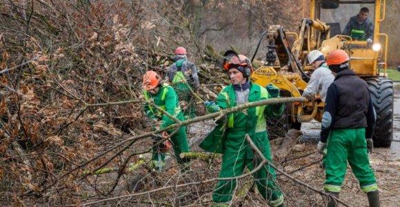 Gyventojai piktinasi kertamais medžiais, Vilniaus savivaldybė tvirtina tvarkanti Vilnios pakrantes