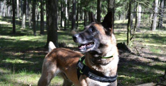 Žirmūnuose policija gaudė užpuoliką: jį rasti padėjo kinologai su šunimis