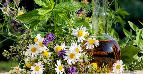 Biomedicinos mokslų daktarė pataria, kaip taisyklingai rinkti, džiovinti ir laikyti vaistinius augalus