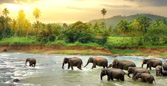 Kelionė į Šri Lanką: patarimai ir įdomybės