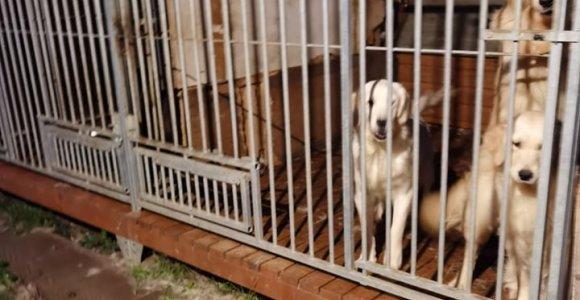 Žiauriai su gyvūnais besielgusiems žmonėms svarstoma apriboti galimybes laikyti augintinius