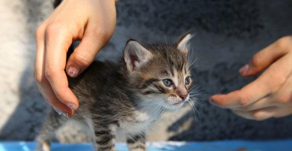 Kupiškyje rasti nuskandinti kačiukai, policija ieško žiaurių žmonių