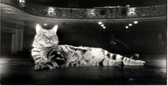 Tai garsiausias teatro katinas istorijoje – kuo jis papirko aktorius ir žiūrovus?