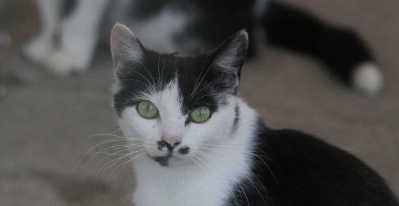 Katiną pro langą išmetusi neblaivi radviliškietė atsidūrė areštinėje