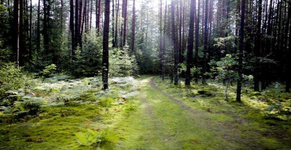 Miško žemės pardavėjams – nauji draudimai