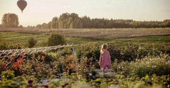 Angelina ir Dainius Kurauskai ir jų skinamų gėlių ūkis