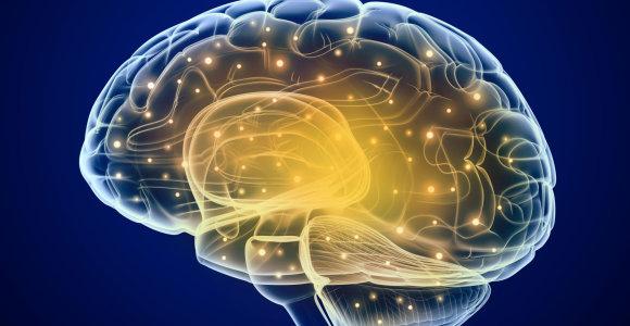 Oksfordo universiteto mokslininkai aptiko keistą katalogavimo sistemą mūsų smegenyse