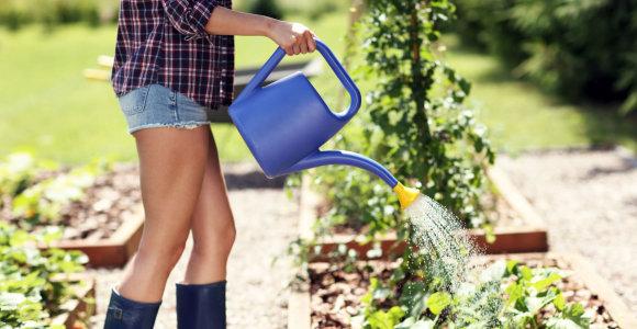 Agronomas T.Gurskas – apie daržų laistymą per karščius ir vaismedžių priežiūrą