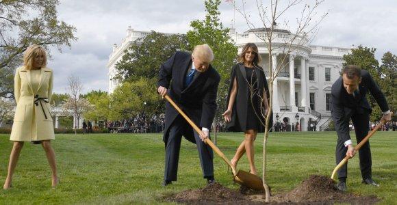 E.Macronas išsiųs D.Trumpui naują ąžuoliuką, nunykus prie Baltųjų rūmų pasodintam medeliui