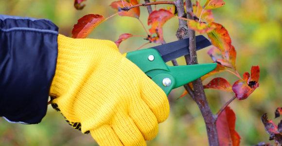 Darbai, kuriuos rudenį privalu atlikti sode, darže ir šiltnamyje. Specialistų patarimai