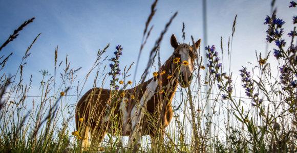 Arklių mainai marijampolietį atvedė į teisiamųjų suolą