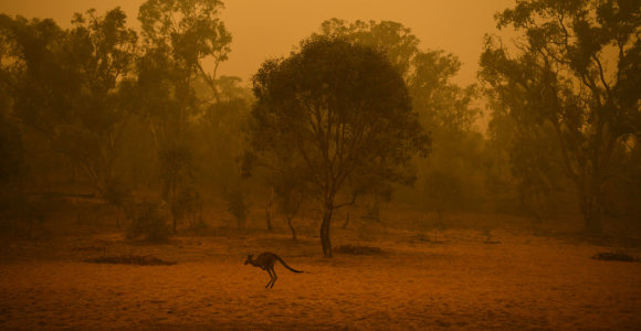 Australijoje dėl sausros prognozuojamas rekordiškai mažas derlius