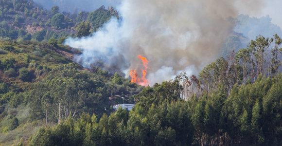 Gran Kanarijoje nuslopus gaisrui visi evakuoti gyventojai gali grįžti namo