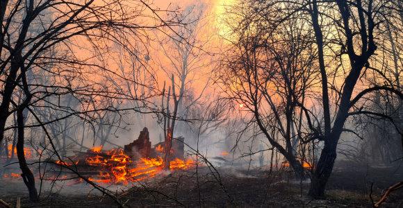 Ukraina neigia radiacinio fono padidėjimą per miško gaisrą Černobylio zonoje