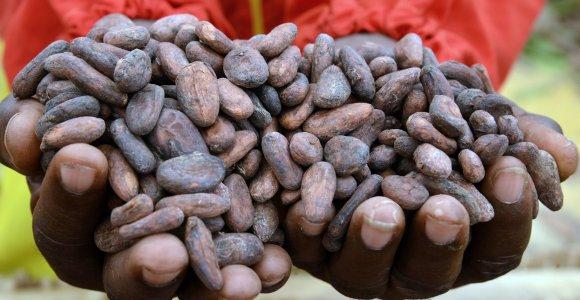 Pagrindiniams gamintojams grasinant nutraukti tiekimą, kakavos kainos šovė į viršų