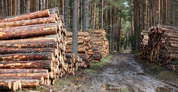 Seimas nusiteikęs nustatyti mažmeninės ir didmeninės prekybos mediena taisykles