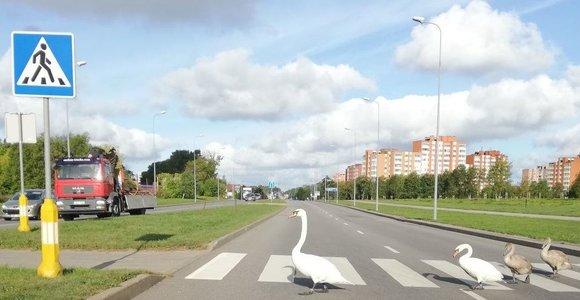 Skaitytojo nuotrauka: štai kaip reikia laikytis Kelių eismo taisyklių