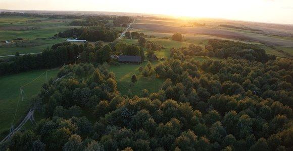 Didžiausias Lietuvoje rankomis sodintas Ąžuolynas: istorija, J.Basanavičius ir gilių kava