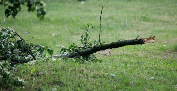 Kai virsta medžiai: koks didžiausias vėjo greitis kada nors buvo užfiksuotas Lietuvoje?