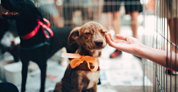 Ką reikia žinoti svarstant priglausti beglobį gyvūną: mitai, klaidos ir specialistų patarimai