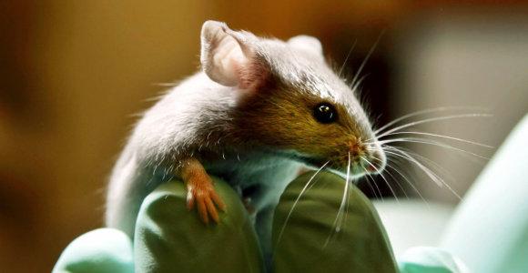 Amerikiečiai kuria išblaivinančius vaistus: pelėms jau veikia