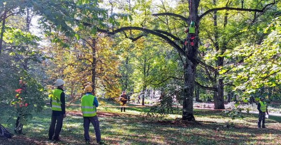 Tarptautinė arboristų bendruomenė siekia vienodo medžių priežiūros standarto visoje Europoje