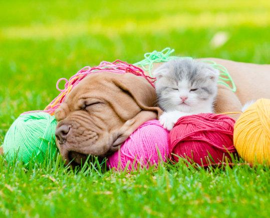Shutterstock nuotr./Šuns ir katino draugystė.