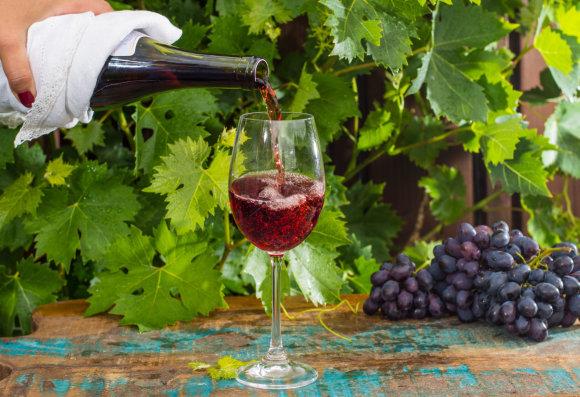 Vida Press nuotr./Pinot Noir vynuogės ir vynas