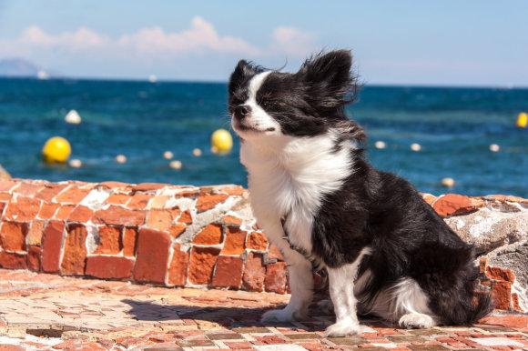 Fotolia nuotr./Šuo