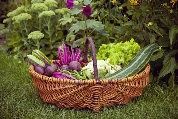 Shutterstock/Vaisiai ir daržovės