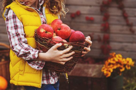 Fotolia nuotr./Pintinė obuolių