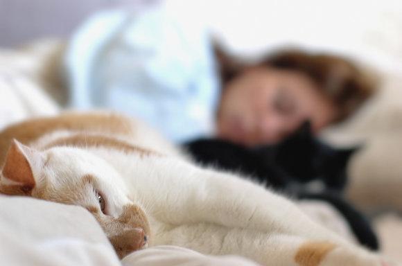Vida Press nuotr./Mieganti moteris ir katės