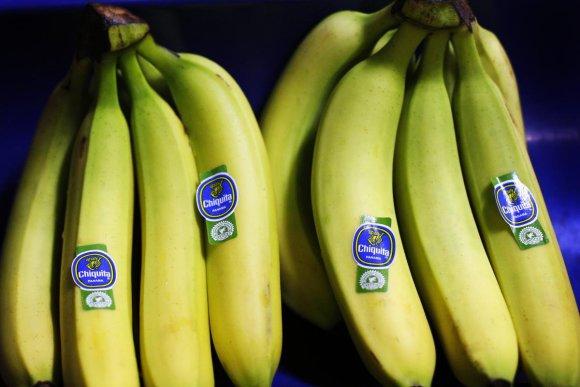 Islandijoje Žemės ūkio universitete užauginti bananai