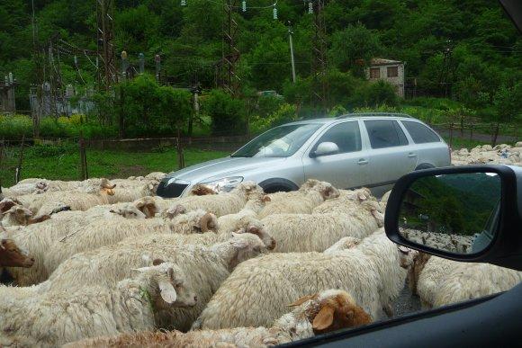 Šarūno Janicko nuotr./Avių banda sutrikdė eismą