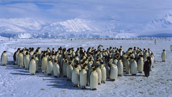 Kelioniuakademija.lt nuotr./Pingvinai Antarktidoje