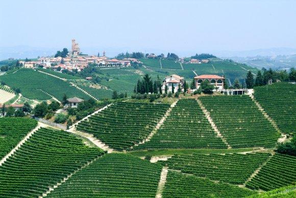 123rf.com nuotr./Pjemontą garsina vynuogynai