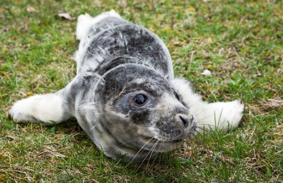 A.Mažūno nuotr./Jūrų muziejus šį pavasarį priglaudė du ruonių pamestinukus.