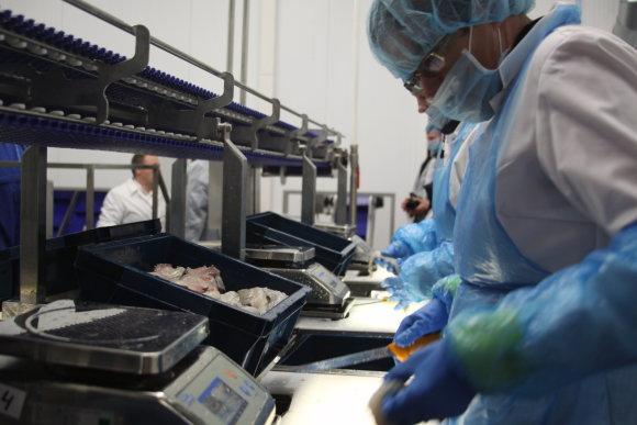 J.Andriejauskaitės nuotr./Klaipėdos žuvininkystės produktų aukcionas pakeitė veiklos kryptį ir ėmėsi žuvies perdirbimo.