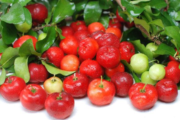 Fotolia nuotr./Kraštuotosios malpigijos vaisiai
